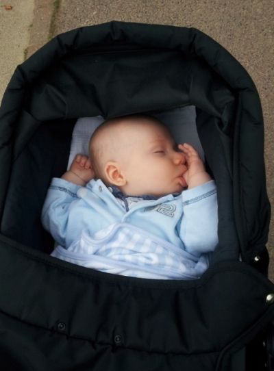 Little Mister sleeping at park